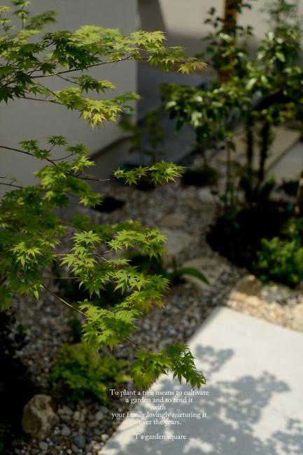 シンボルツリーモミジを玄関