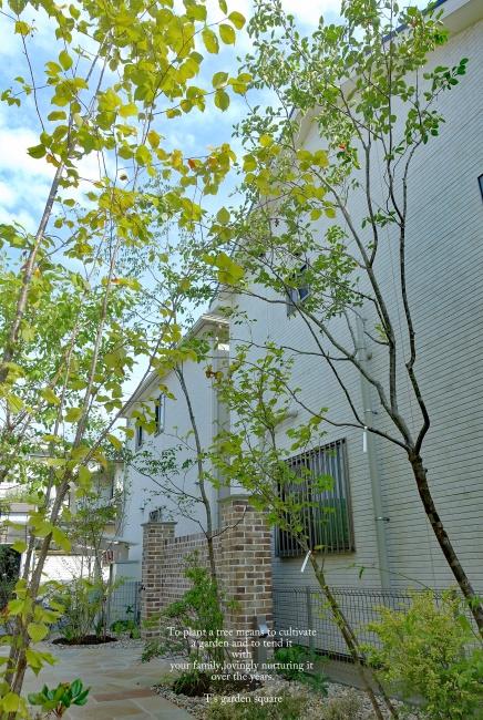 ジューンベリーの木立