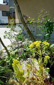 山野草の花壇