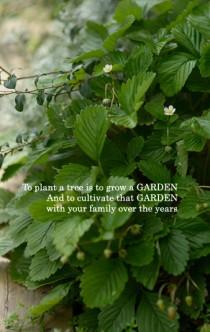 イチゴイメージ 家庭菜園