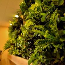 屋内用壁面緑化