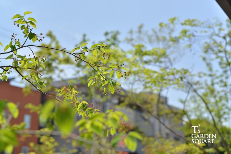 雑木の庭イメージ ジューンベリー