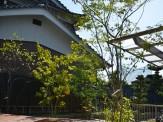 雑木の庭 ガーデン