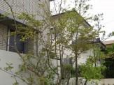 生け花スタイル雑木