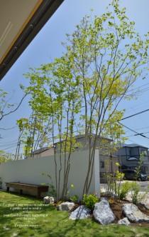 雑木の庭イメージソロ