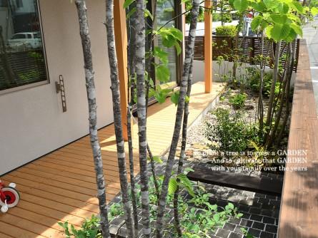 アズキナシの樹皮はアオダモに似ている