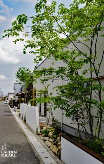 ヤマボウシ雑木の庭
