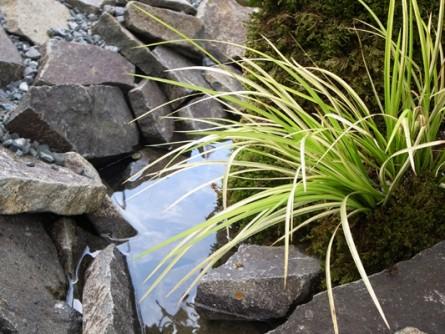 オオゴンセキショウと川の庭