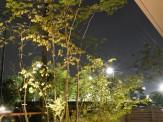 雑木の庭 ライトアップ