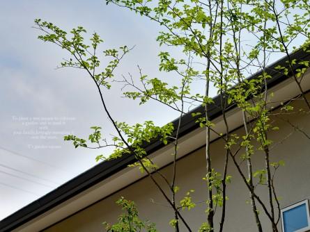 雑木の庭アオハダ