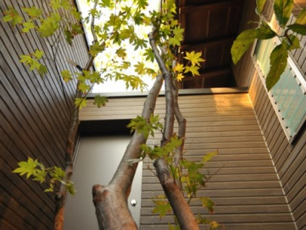 イロハモミジ 風呂坪庭