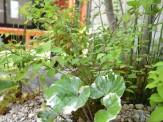 雑木の坪庭
