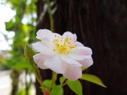 ポールズ花