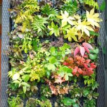アートキャンパス壁面緑化