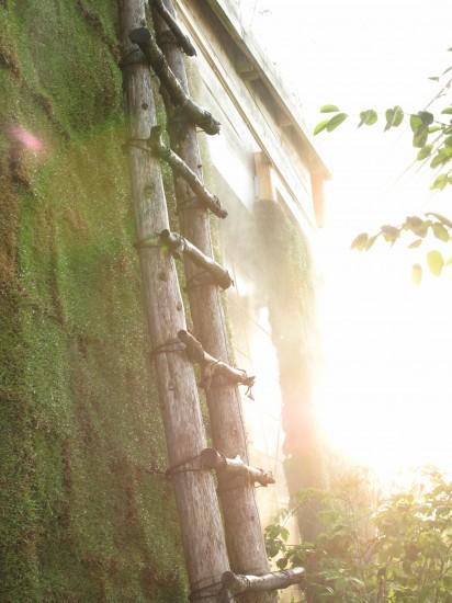 壁面緑化・芝