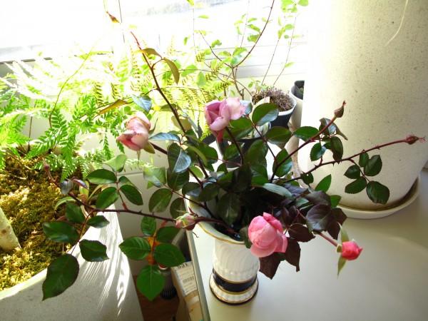 つるバラ蕾切り花