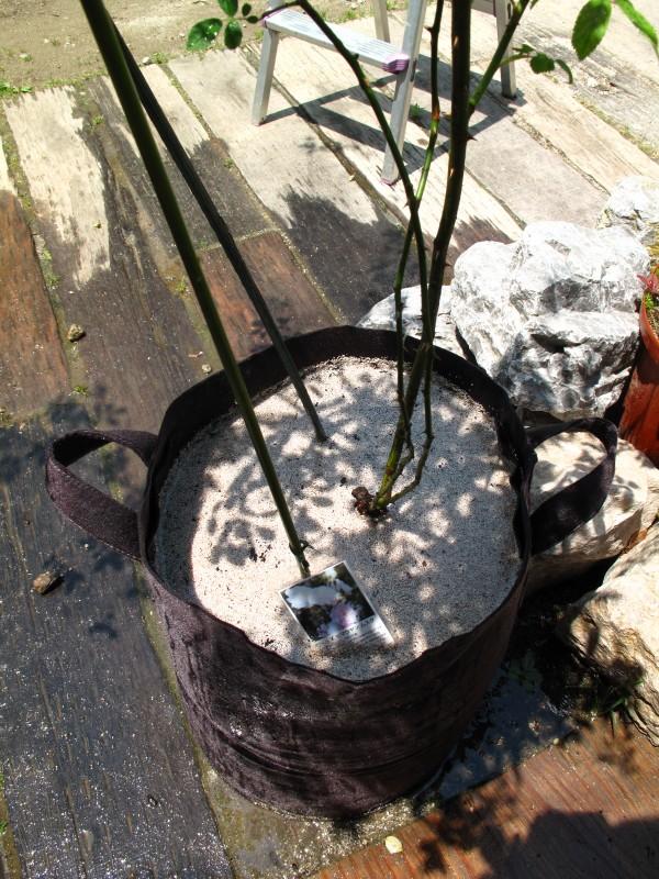 フエルト鉢