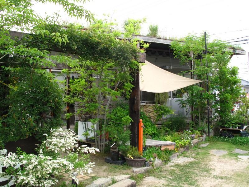 シルバープリペット庭