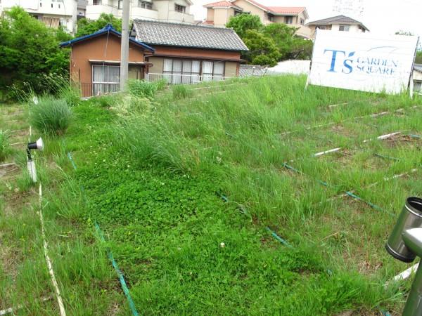 屋上緑化2012.5.1