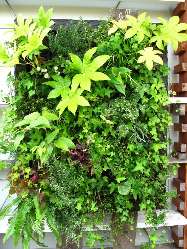 壁面緑化モデルノ