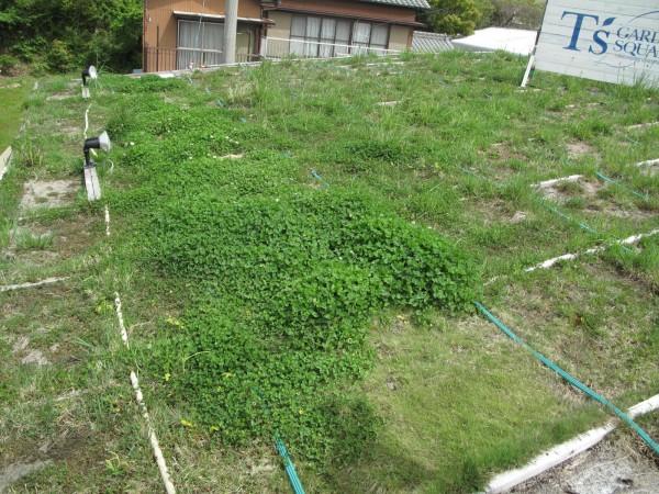 屋上緑化2011.5.2