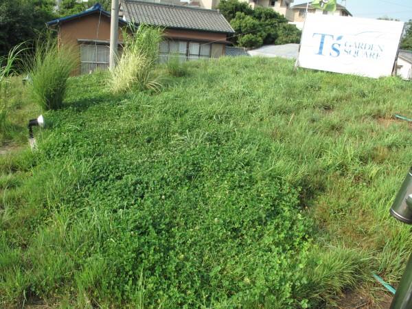 2011.8.10屋上緑化