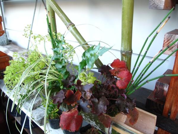 Bamboo植物