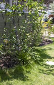庭を生ける