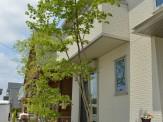 玄関前 雑木の庭