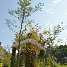 アカマツの庭