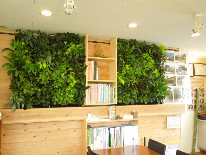 室内壁面緑化プラティコ