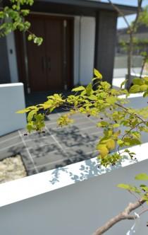 ナツハゼ シンボルツリー