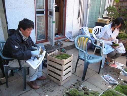 コケ掃除・植物の管理