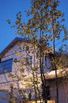 アズキナシ夜景