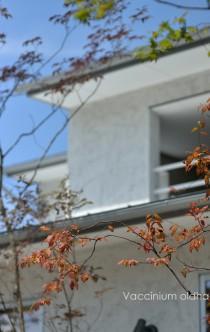 ナツハゼ紅葉