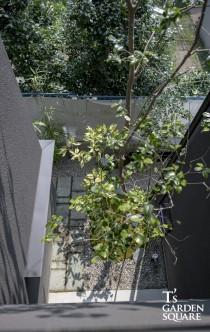 二階から見える木